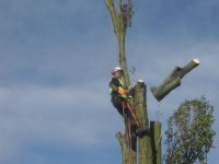 Tree Removal Dismantle Sections