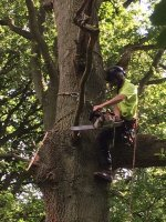 Emergency Damaged Tree Services