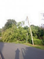 Storm Emergency Powerlines Down Tree Surgeons Rescue
