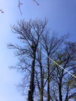 Tree Surgeons Removing Tree Whitby