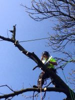 Tree Surgery Cleveland