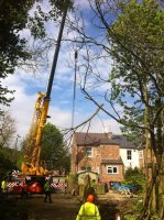 Tree Surgery Expert Yorkshire