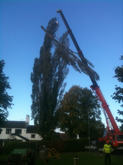 Crane Tree Removal Works